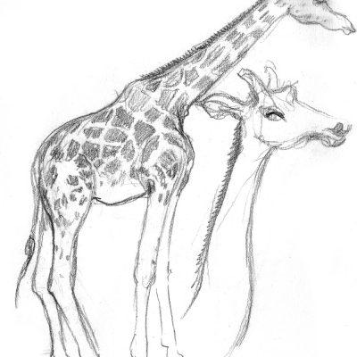 LondonZoo_Giraffa