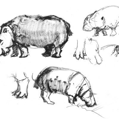 LondonZoo_Hippo