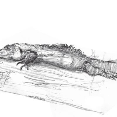LondonZoo_Reptile
