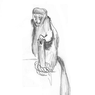 LondonZoo_Monkey
