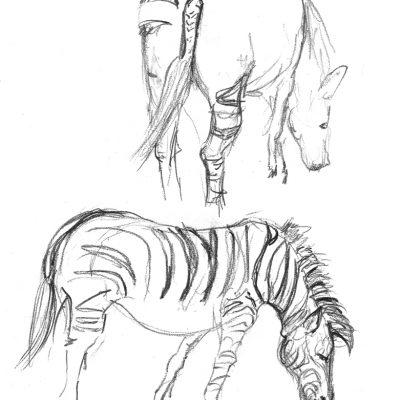 LondonZoo_Zebra