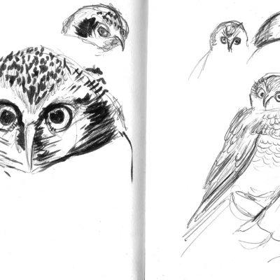LondonZoo_Owls