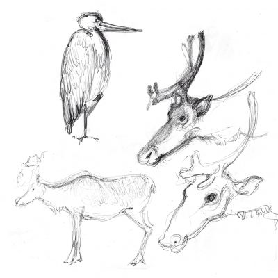 LondonZoo_Sketches